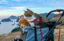 Ghen tỵ với 2 chú mèo du lịch khắp Nhật Bản cùng ông chủ doanh nhân