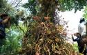 """Cây """"hoa lạ"""" ở Sài Gòn khiến nhiều người thích thú"""