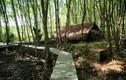 Khám phá căn cứ địa huyền thoại Rừng Sác