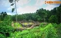 Lăng mộ ít biết của 9 chúa Nguyễn: Lăng Trường Diên