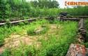 Lăng mộ ít biết của 9 chúa Nguyễn: Lăng Trường Diễn