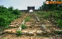 Lăng mộ ít biết của 9 chúa Nguyễn: Lăng Trường Thái