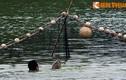 Ảnh độc: Bộ đội đặc công bắt cụ Rùa Hồ Gươm 2011