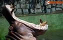 """Khoảnh khắc """"khó đỡ"""" của động vật ở Thảo Cầm Viên Sài Gòn"""