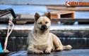 """Ảnh """"độc"""" những chú chó cả đời lênh đênh sông nước ở Việt Nam"""