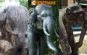 Cận cảnh loạt tượng voi cổ độc đáo nhất Việt Nam