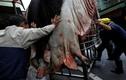 Vì sao lễ hội lợn thần ở Đài Loan khiến thế giới phẫn nộ?
