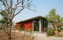 Căn nhà gạch bông ở Nam Định đẹp cuốn hút trên báo nước ngoài