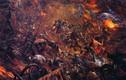 Trận đánh nào làm 700.000 người chết trong lịch sử Trung Quốc?