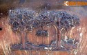Những cây gỗ quý nào xuất hiện trên Cửu Đỉnh nhà Nguyễn?