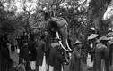 Hình độc về lễ hội đền Voi Phục năm 1928
