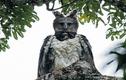 """Video: Cận cảnh """"nỗi khiếp sợ"""" của khỉ rừng xanh"""