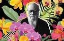 Khó tin: Nhờ hoa lan, Darwin xây dựng được thuyết tiến hóa