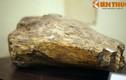 Cận cảnh hóa thạch khủng long thứ thiệt giữa Hà Nội