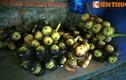 Điều kỳ thú ít người biết về cây thốt nốt miền Tây Nam Bộ