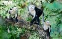 Điều ít biết về con cà đác từng bị coi là tuyệt chủng ở Việt Nam