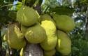 Sự thật bất ngờ về nguồn gốc các loài cây ăn quả (2)