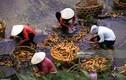 Việt Nam đầu thập niên 1990 qua ảnh của Christian Sappa (2)