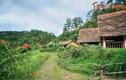 Ngôi làng như bước ra từ cổ tích giữa núi rừng Đà Lạt