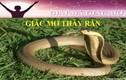 Video: Nằm mơ thấy rắn là điềm báo gì, lành hay dữ ra sao?