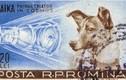 Nỗi đau chó Laika được đưa lên vũ trụ và sự thật phũ phàng