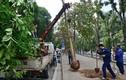 Từ 15/1: Trồng cây sai chỗ có thể bị phạt đến 15 triệu