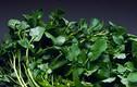 Loại rau quý chống ung thư kỳ diệu có nhiều ở Việt Nam