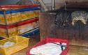 Video: Kinh hoàng nội tạng bò ngâm trong nước đen sì trước khi chế biến