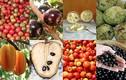 Những loại hoa quả bình dân phục vụ Olympic Rio 2016