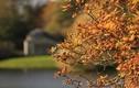 5 bệnh mùa thu dễ mắc nhất và cách phòng tránh