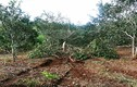 """Bắn chết 3 người ở Đắk Nông: Tỉnh chỉ đạo """"nằm im"""", DN vẫn hoạt động"""