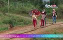 """Con đường """"bê tông tre"""" độc nhất vô nhị Việt Nam"""