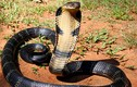 Video: 10 loài động vật có nọc độc nguy hiểm nhất hành tinh