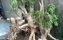 Video: Chỉ một nhúm lá cây quanh nhà cũng giúp não minh mẫn