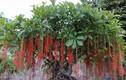 Video: 10 cây cảnh nhất định phải trồng trong nhà để tiền vào như nước