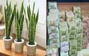 Video: Nghèo mấy cũng giàu lên nhanh chóng nếu có thứ này trong nhà