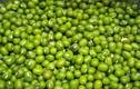 """Video: Đậu xanh - thực phẩm """"vàng"""" cho sức khỏe"""