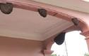 Video: Ong làm tổ trong nhà là điềm báo gì?