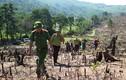 Thủ tướng yêu cầu điều tra vụ phá rừng quy mô lớn ở Bình Định