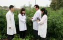 Dược phẩm Tâm Bình tạo ra các sản phẩm chất lượng từ nguồn dược liệu sạch