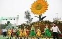 Khai mạc lễ hội hoa kéo dài 1 tháng tại Sun World Halong Complex