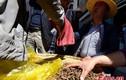 Cận cảnh phố Tây Tạng bán đông trùng hạ thảo như bán rau