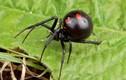 10 điều lầm tưởng kỳ lạ về loài nhện