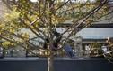 Treo điện thoại lên cây để lừa Amazon
