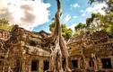 Độc đáo những ngôi đền, đình chùa ẩn mình dưới bộ rễ cây cổ thụ