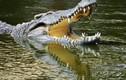 Vườn quốc gia lớn nhất miền Nam, có nhiều bò tót và cá sấu hung dữ