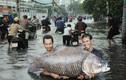"""TP HCM ngập lụt, """"thánh chế ảnh"""" trổ tài khiến dân tình cười ngất"""