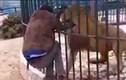 Video: Sư tử hung hãn đớp tay nhân viên sở thú
