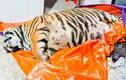 Ông chủ căn nhà nơi phát hiện con hổ nặng 2,5 tạ ra đầu thú
