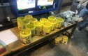Hải quan Tân Sơn Nhất bắt giữ 5,84 kg ma túy trong lô hàng gửi từ Mỹ